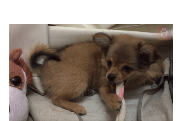 petcam app, petcamapp, best dog camera app, pet camera, dog monitor app, macos, windows, iOS, android, apple, google play