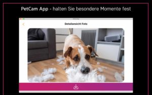 petcamapp, petcam app, hundesitter für windows pc, haustier kamera app für windows, hundemonitor ap für windows, hundemonitor windows, beste haustier kamera für windows, hund, katze, Hundemonitor Annie Kamera für windows